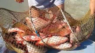 Рыбалка на оби с берега