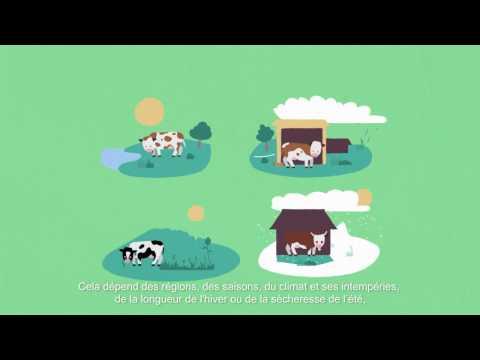 L'alimentation des vaches laitières françaises