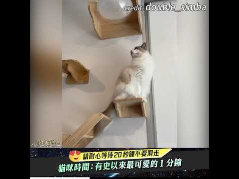 專為貓貓設計的房間步道