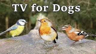 TV for Dogs - Calm Your Dog with 8 Hours of Birds in The Forest