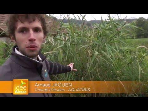 AQUATIRIS, l'assainissement par les plantes !