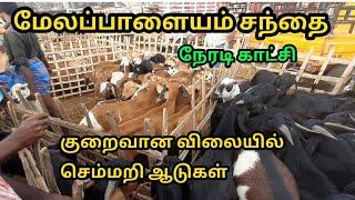 broiler goat farming in tamilnadu - TH-Clip