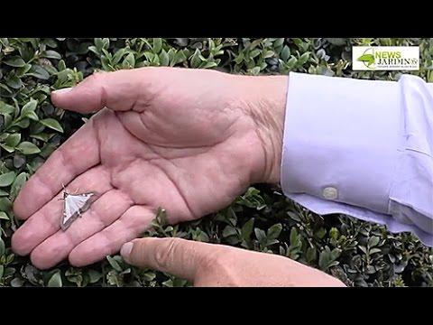 La prophylaxie des parasites dans le poisson