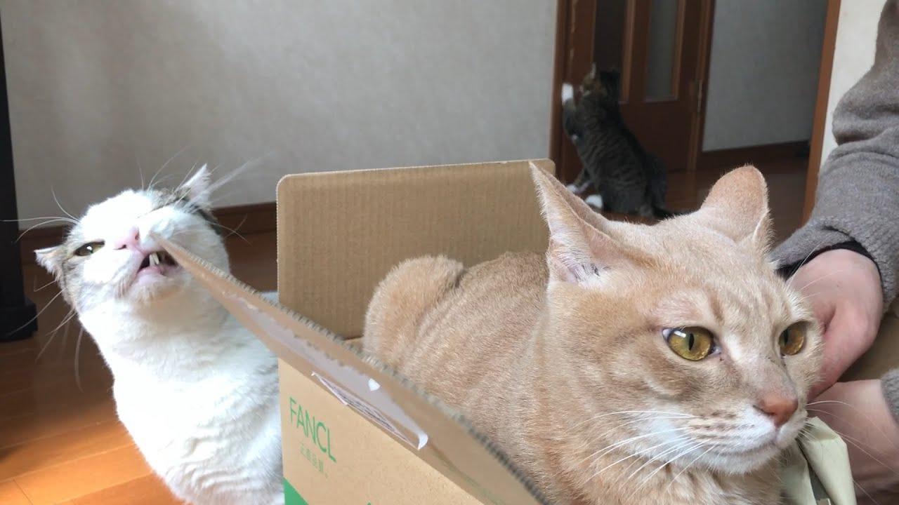 ごっつい機嫌が悪い猫