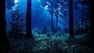 """Sonidos de la Selva Y Pájaros - """"Música"""" Relajante"""