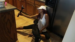 JAZMINE AND JUICE FIGHT IN THE KITCHEN! | Daily Dose S2Ep264