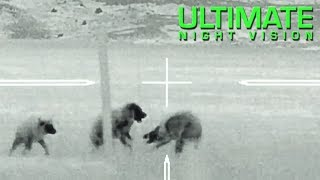 Gambar cover Best Thermal Coyote Hunting Footage with the Trijicon IR Hunter MKIII 60mm