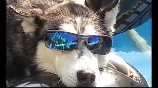 Gambar cover Gangnam style 2018 funny Animal dance