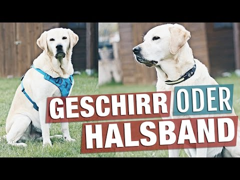 Geschirr oder Halsband | Passt meinem Hund das Hundegeschirr?