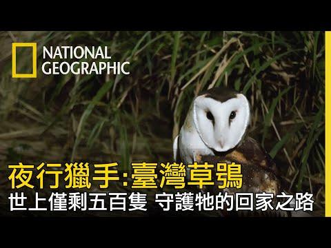 【夜行獵手:臺灣草鴞】守護僅剩不到五百隻臺灣草鴞-全片線上看