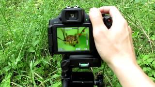 Super Macro Photography Tutorial - Canon PowerShot SX60 HS & Raynox DCR-150 Macro Lens