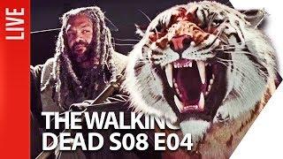 the walking dead s08e05 rarbg