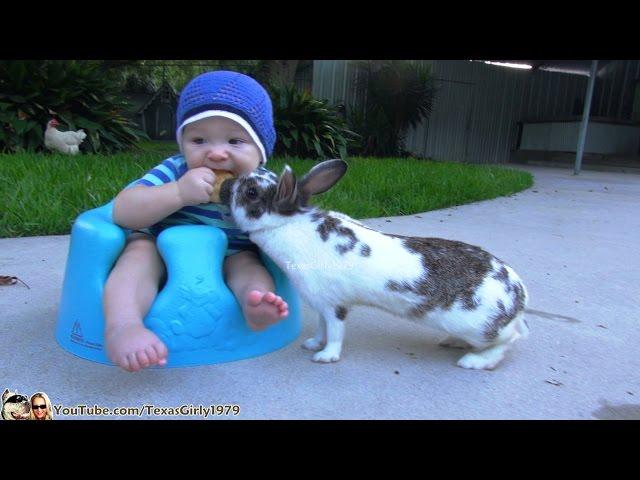 أرنب يسرق قطعة بسكويت من طفل رضيع