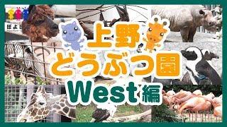 上野動物園の動画🐾西園編🦒キリン🐧ペンギン🐪アルパカ🦓シマウマなど🐥UenoZoo