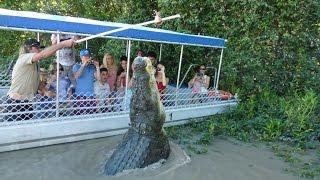 Крокодила поймали на удочку