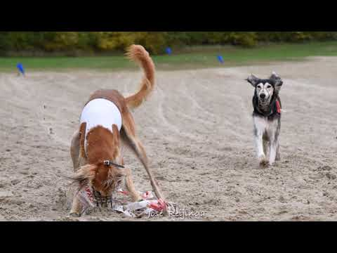 CACIL herfstcoursing 2019