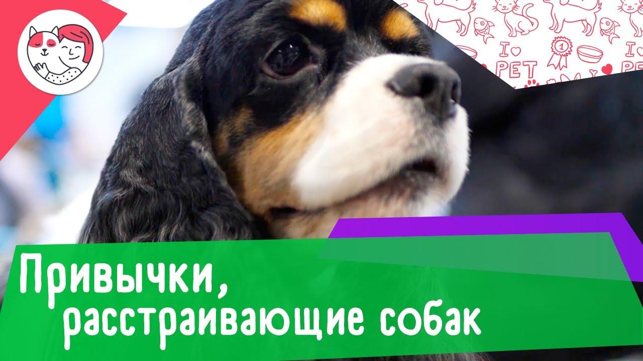 4 человеческие привычки, которые расстраивают собак