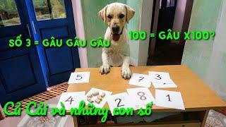 Củ Cải học thuộc hết những con số - Ở Việt Nam chưa chú chó nào làm được | My dog and numbers