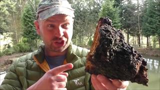 Hunting Chaga Mushroom and Making Chaga Tea