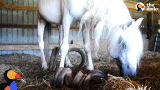 Horse With Overgrown Hooves Rescued From Barn | The Dodo