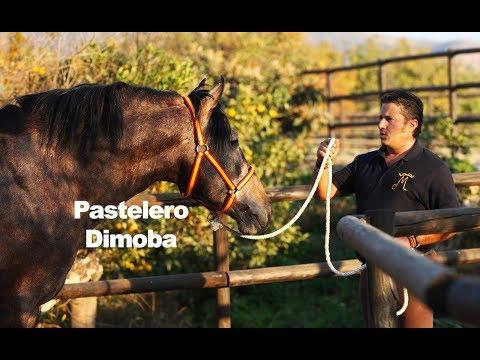 Pastelero Dimoba (Trabajo a la mano-15-12-2018)