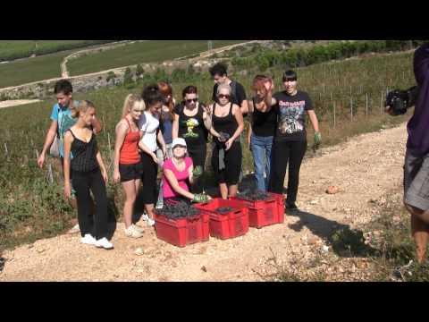 BERBA GROŽĐA - Plenkovića vinogradi, 29.9.2011.