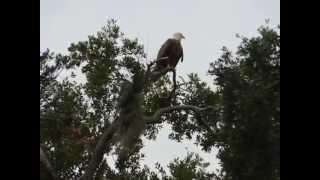 Various Wildlife in Bellalago Community, Kissimmee Fl