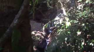 preview picture of video 'Through the Khao Phra Thaeo Sanctuary jungles (Phuket vacation 06.03.13-12.03.13)'