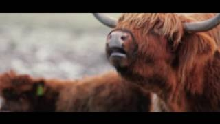 YouTube: Tomatin 18 yrs old