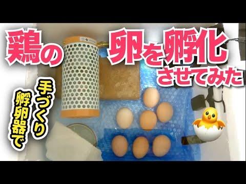 , title : '#39 自作孵卵器で卵を孵そう!