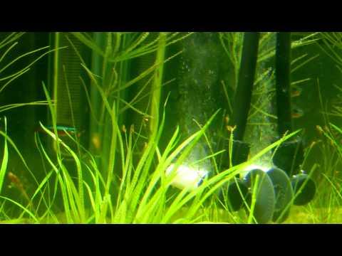 Green Leaf Aquariums Atomic CO2 Diffuser