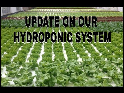 Under Current Recirculating Deep Water Culture Hydroponic System on