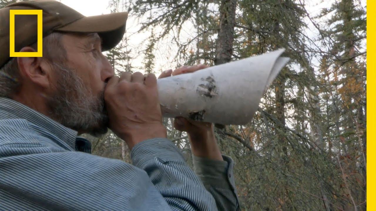 Game Calling | Yukon River Run thumbnail