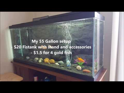 Cheap 55 gallon fish tank