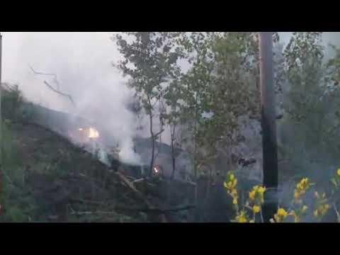 В Интернете появился видеоролик о последствиях попытки поджога леса в Тольятти