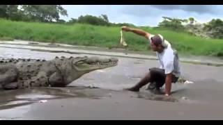 Турист и крокодил  Приколы