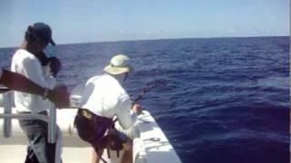 PSFL Crazy Marlin Video