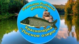 На что клюет берш реальной рыбалке