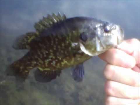 RCF: Pond Fishing Ep.14: Warmouth