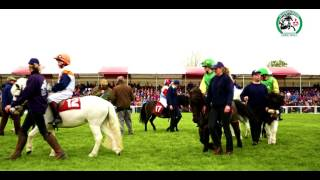 Action From The Shetland Pony Grand National At #MMBHT 2017