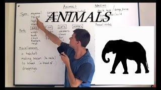 Vocabulary ANIMALS (Lesson 15)