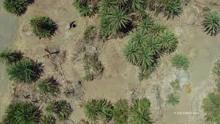 Elim Oasis - Aerial views of the Exodus