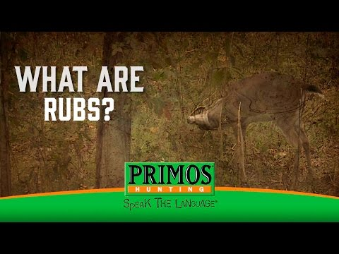 What are Deer Rubs? video thumbnail