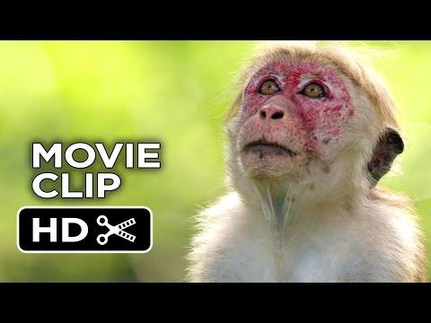 Monkey Kingdom Monkey Kingdom (Clip 'His Name Is Kumar')