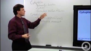 Cytoplasm - Cytoskeleton