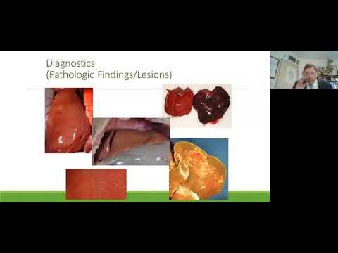 , title : 'Rabbit Hemorrhagic Disease Virus 2 (RHDV2) Overview