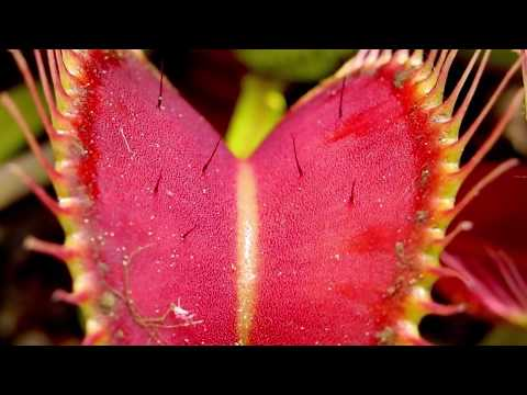 Papilloma virus cure naturali