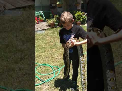 Download Baby Reticulated Mainland Female Python And My 11 Year Old Son HD Mp4 3GP Video and MP3