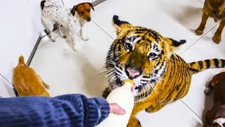 😊 10 most awesome and unusual pets ever