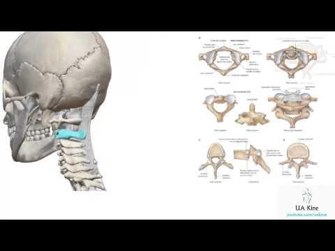 Lesiones de ligamentos de las articulaciones